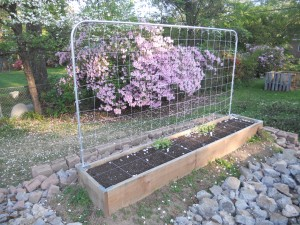 Image: Raised-Bed Garden with Conduit Trellis