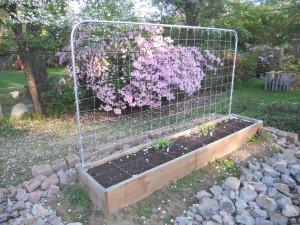 Image: Raised-Bed Garden with Conduit Trellis